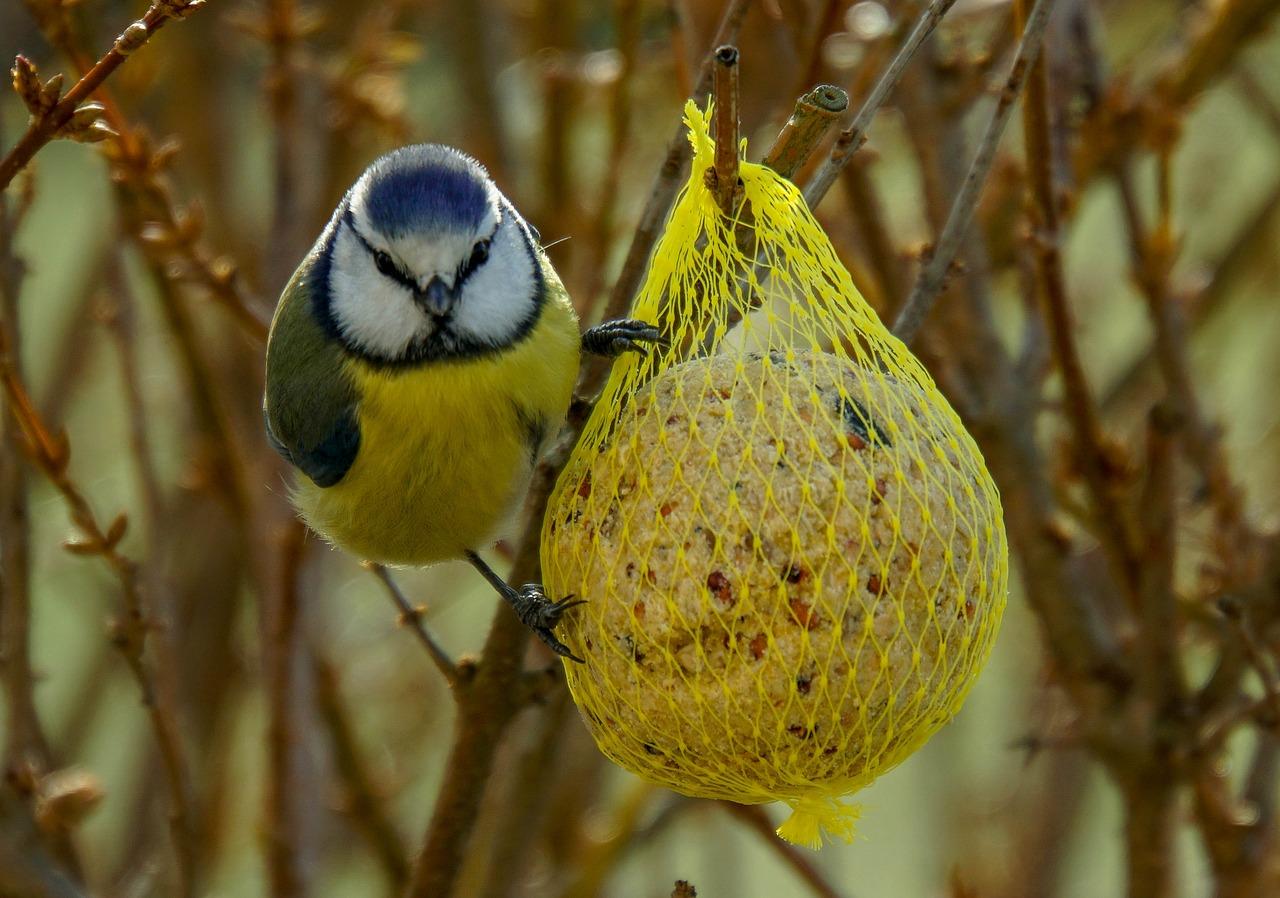 Saako taloyhtiöissä ruokkia lintuja talvisin?