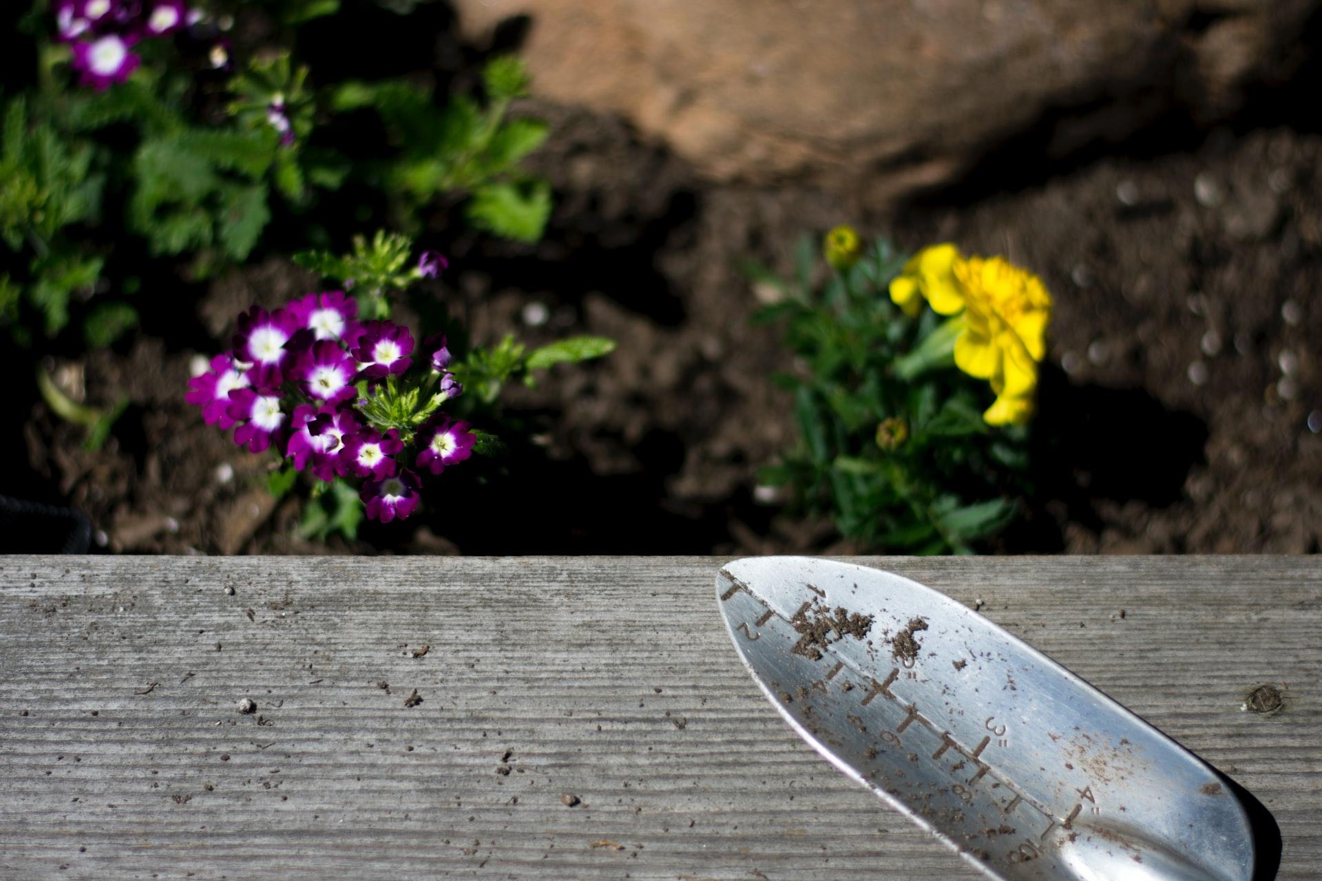Kysy taloyhtiöstä: Voiko taloyhtiön pihaan kylvää kukkien siemeniä tai istuttaa taimia oma-aloitteisesti?